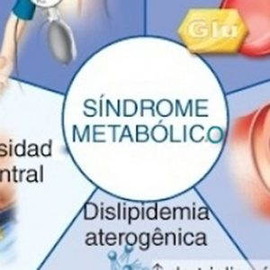 Sistema Metabolico